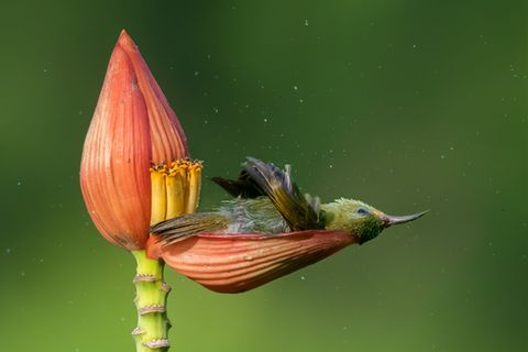 Mousam Ray/Bird Photographer of the Year