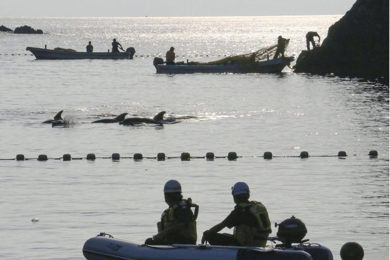 Fischer jagen Delfine vor Taiji