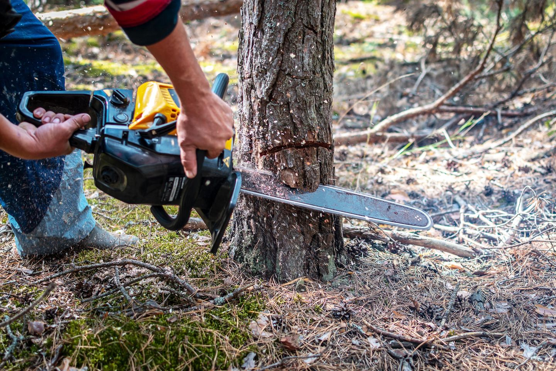 Mann sägt einen jungen Kiefernbaum mit einer Kettensäge