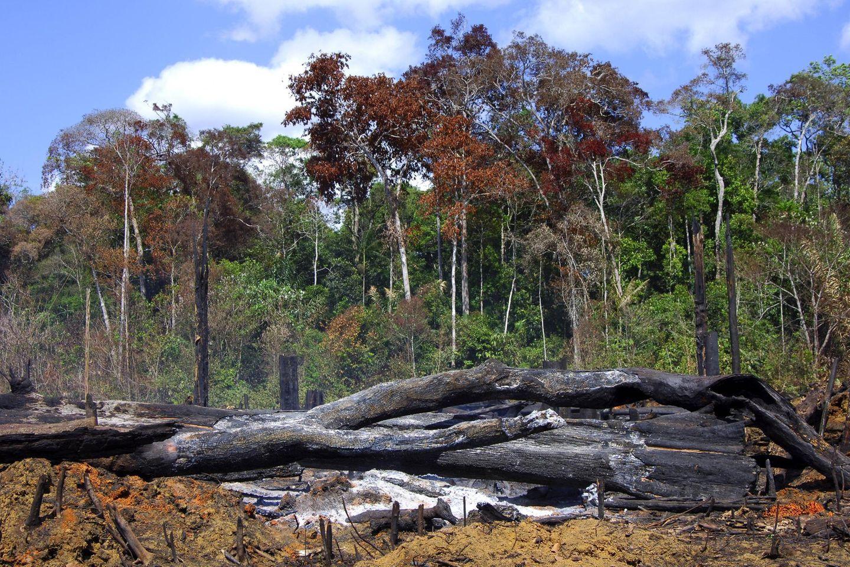 Brandrodung im Amazonas Regenwald in Brasilien