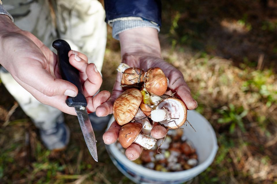 Ein Mann hält frisch gepflückte Pilze im Wald in den Händen
