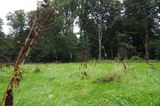 Höchste natürliche Erhebung im Friedehorstpark Bremen
