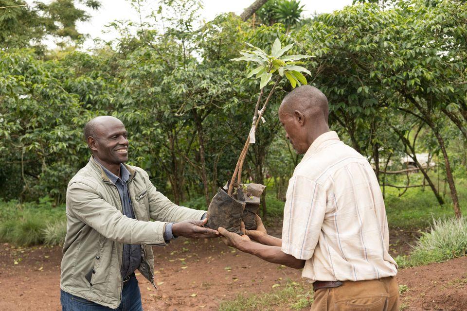 Projektkoordinator Tamiru Haile (links) überreicht dem FarmerAlemayehu Haile einen gepfropften Mangobaumsämling