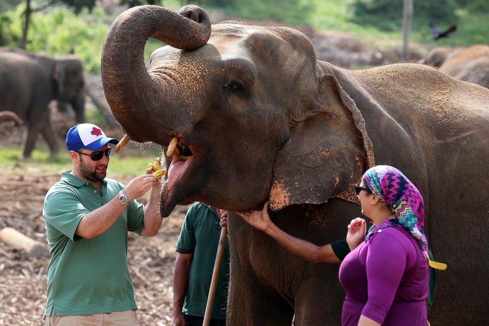 Elefanten sind auf Sri Lanka ein großes Streitthema