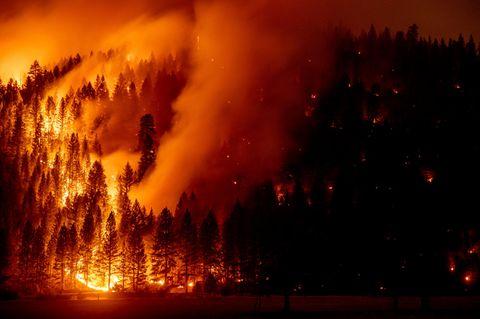 Genesee, USA: Die Flammen des Dixie-Feuers breiten sich immer weiter aus. Die verheerenden Waldbrände in verschiedenen Regionen der nördlichen Hemisphäre haben in diesem Jahr Kohlenstoff-Emissionen in Rekordhöhe verursacht
