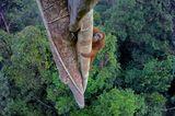 Ausstellung im Gasometer Oberhausen: Großformatige Fotografien lassen den Betrachter mit Affen in die Baumwipfel des Regenwaldes klettern, mit jungen Eisbären spielerisch über das Packeis tollen oder mit einer Karibu-Herde durch die Taiga ziehen.