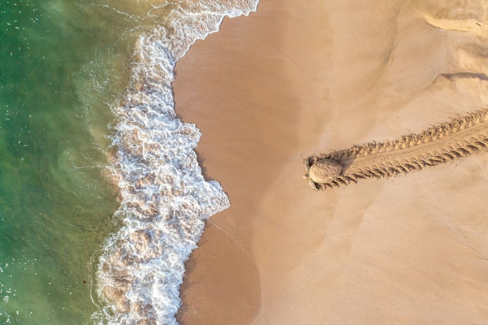 Qasim Al Farsi /Drone Photo Awards 2021