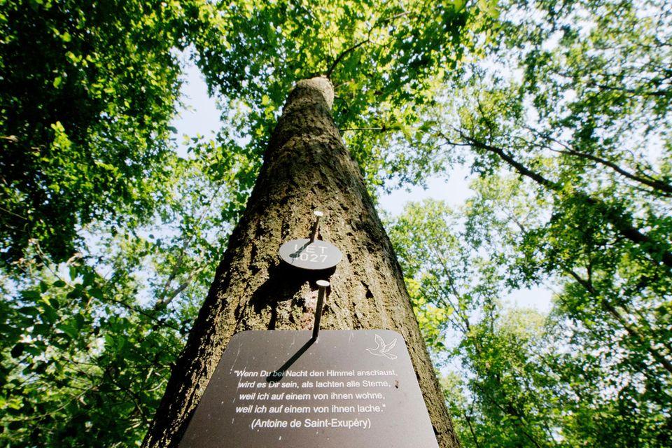"""Naturnahe Bestattungen: """"Wie nach Hause kommen"""": Warum die letzte Ruhe im Wald immer beliebter wird"""