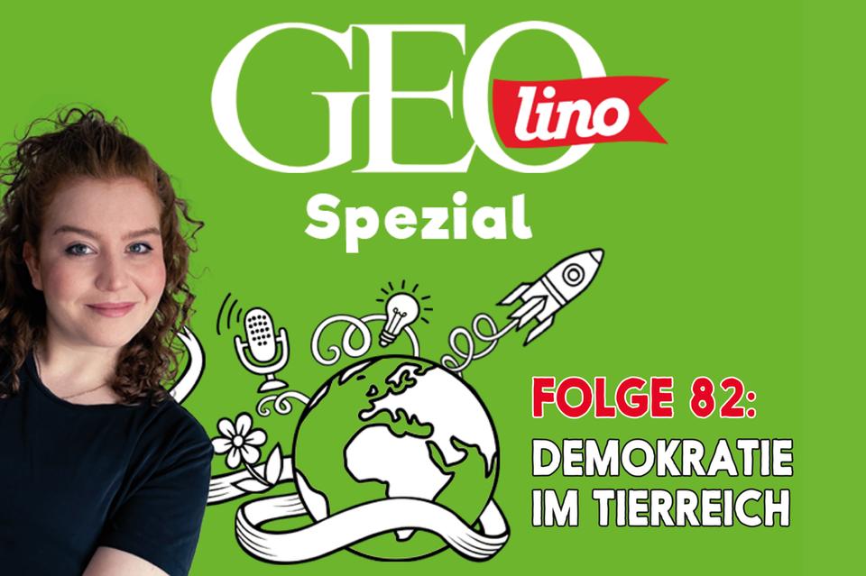 In Folge 82 unseres GEOlino-Podcasts geht es um Demokratie im Tierreich