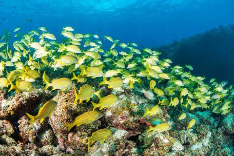 Der Schatz der Karibik: Klimawandel: Warum Kubas Korallenriffe Hoffnung machen