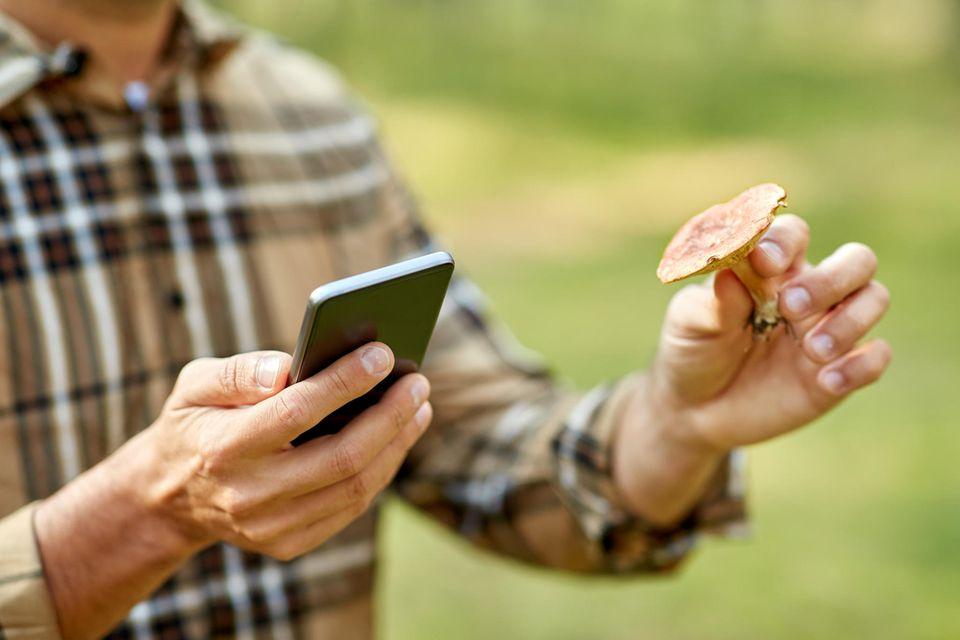 Experten warnen davor, Pilze allein mit Handy-Apps zu bestimmen