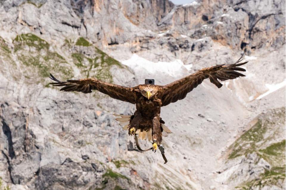 Hightech-Vogelkunde: Die Welt mit den Augen eines Adlers sehen
