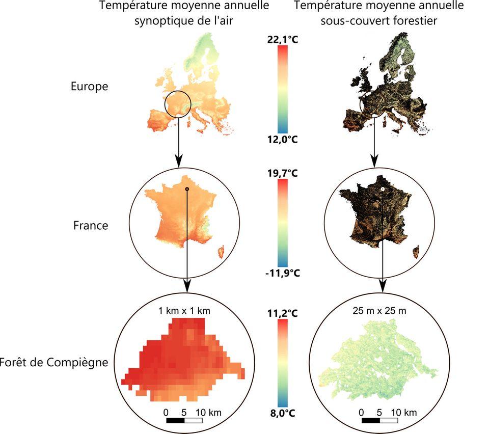 Karten zum Vergleich der mittleren jährlichen Temperaturen der freien Luft (links) und der Temperaturen unterhalb des Kronendachs (rechts) in Europa und Frankreich
