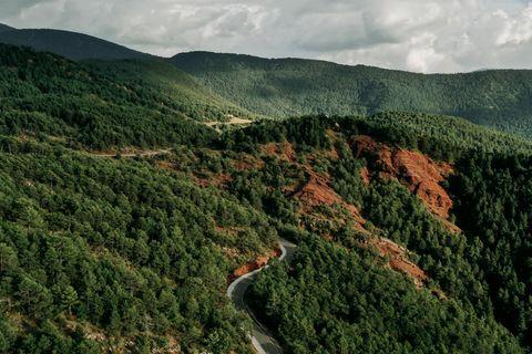 Wald in den Pyrenäen