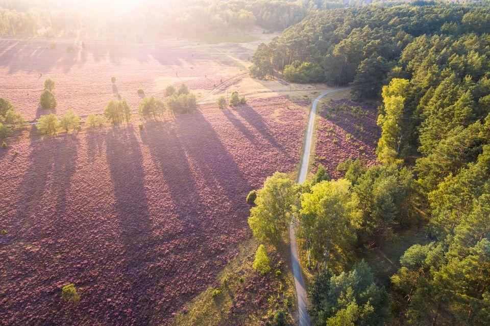 Naturerlebnispfad Südheide (Lüneburger Heide, Niedersachsen)