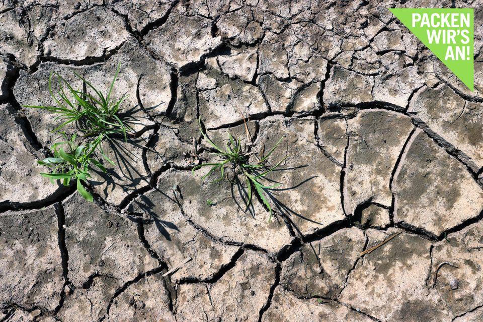 Klimawandel: Wer bekommt Wasser, wenn es in Deutschland knapp wird?