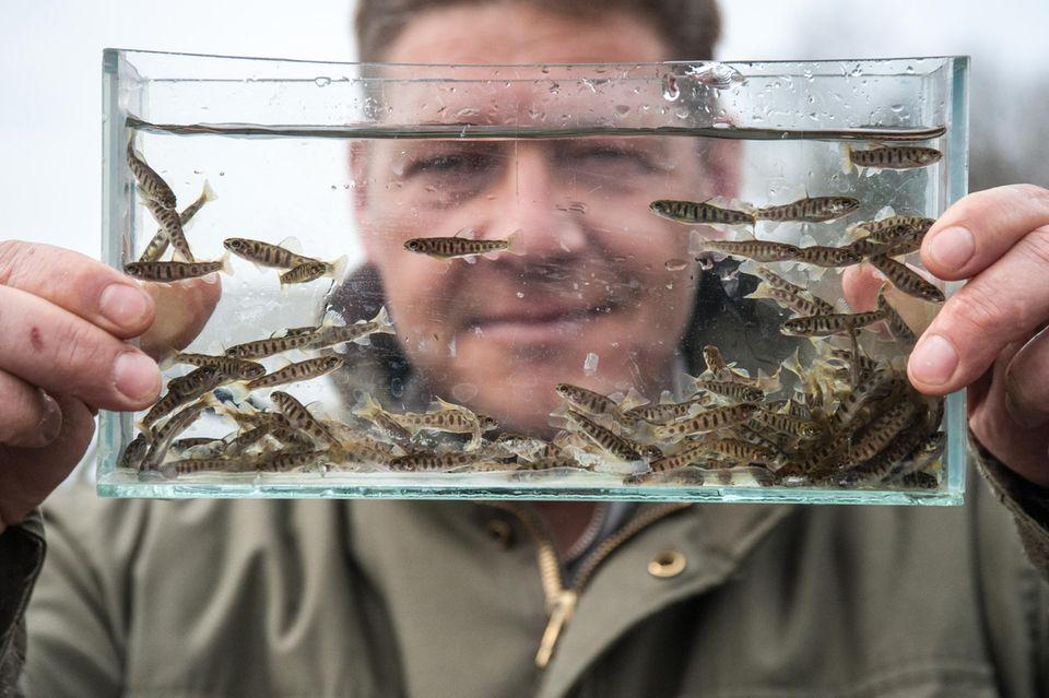 """Das Wohlergehen von Fischen im Blick: Markus Kühlmann kämpft für die Artenvielfalt in Flüssen. """"Machen ist besser als Wollen, sagt er"""