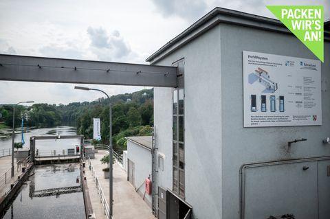 Ruhr: Weltweit erster Lift hilft wandernden Fischen
