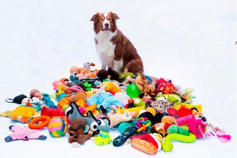 Hund sitzt in einem Haufen Spielzeug