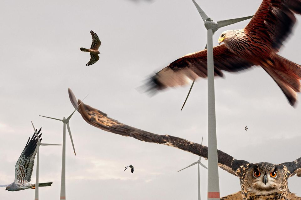Windkraftanlagen lassen sich inzwischen technisch so aufrüsten, dass sie anfliegende Vögel erkennen und die Rotoren rechtzeitig stoppen – zum Wohl etwa von Rotmilan und Uhu, Weißstorch und Wiesenweihe