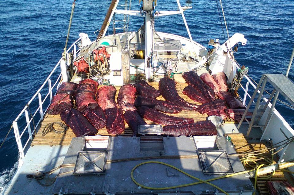 Walfleisch an Bord eines norwegischen Walfängers: Das skandinavische Land ignoriert das seit 1986 geltende, internationale Verbot des kommerziellen Walfangs