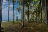Gespensterwald von Nienhagen an der Ostseeküste
