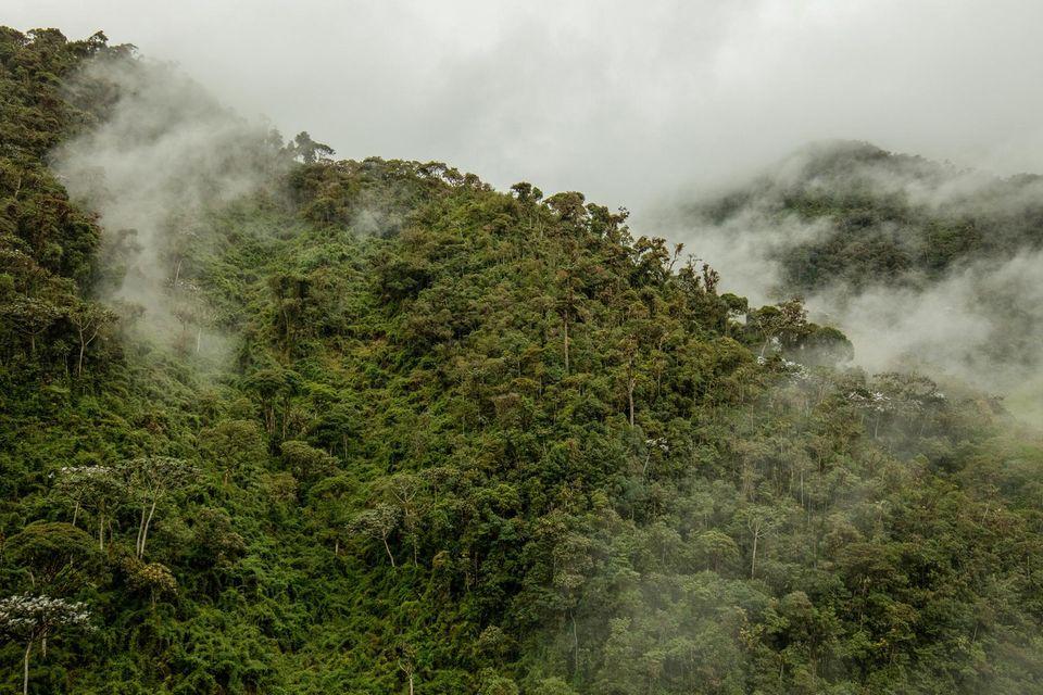 Die tropischen Bergregenwälder des Intag-Tals zählen mit ihren vielen, nur dort vorkommenden Arten zu den reichsten Ökosystemen der Erde und speichern viel CO2. Doch sie sind massiv bedroht