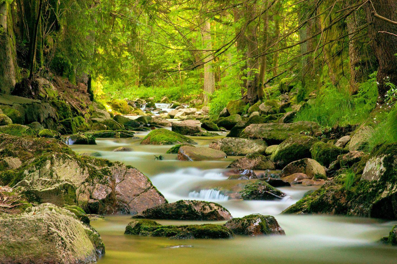Bach im Erzgebirge: Alte, artenreiche Wälder sind als CO2-Speicher wichtig für den Klimaschutz